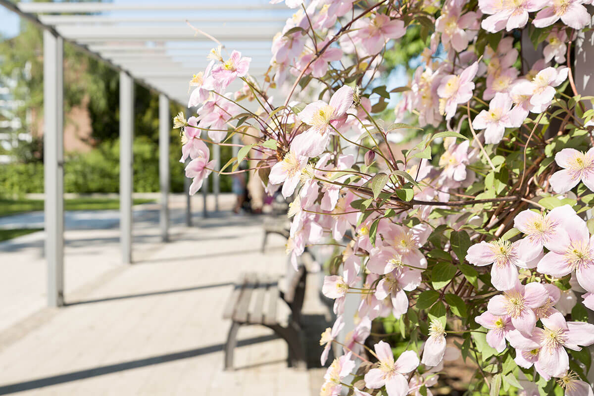 Quartiersplatz Bergheimer Strasse Botanischer Garten Neuss